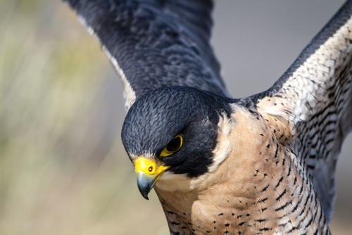 A fix on falcons