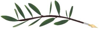 An Olive Leaf